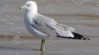 Seagull Intelligence / Bark Butter Bits Review