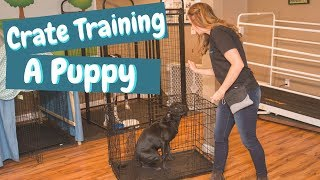 Crate Training a Puppy While at Work