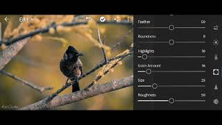 Learn how to edit Bird photo in 5 minutes    in #Lightroom & #Snapseed    #AnkyyPhotos screenshot 5
