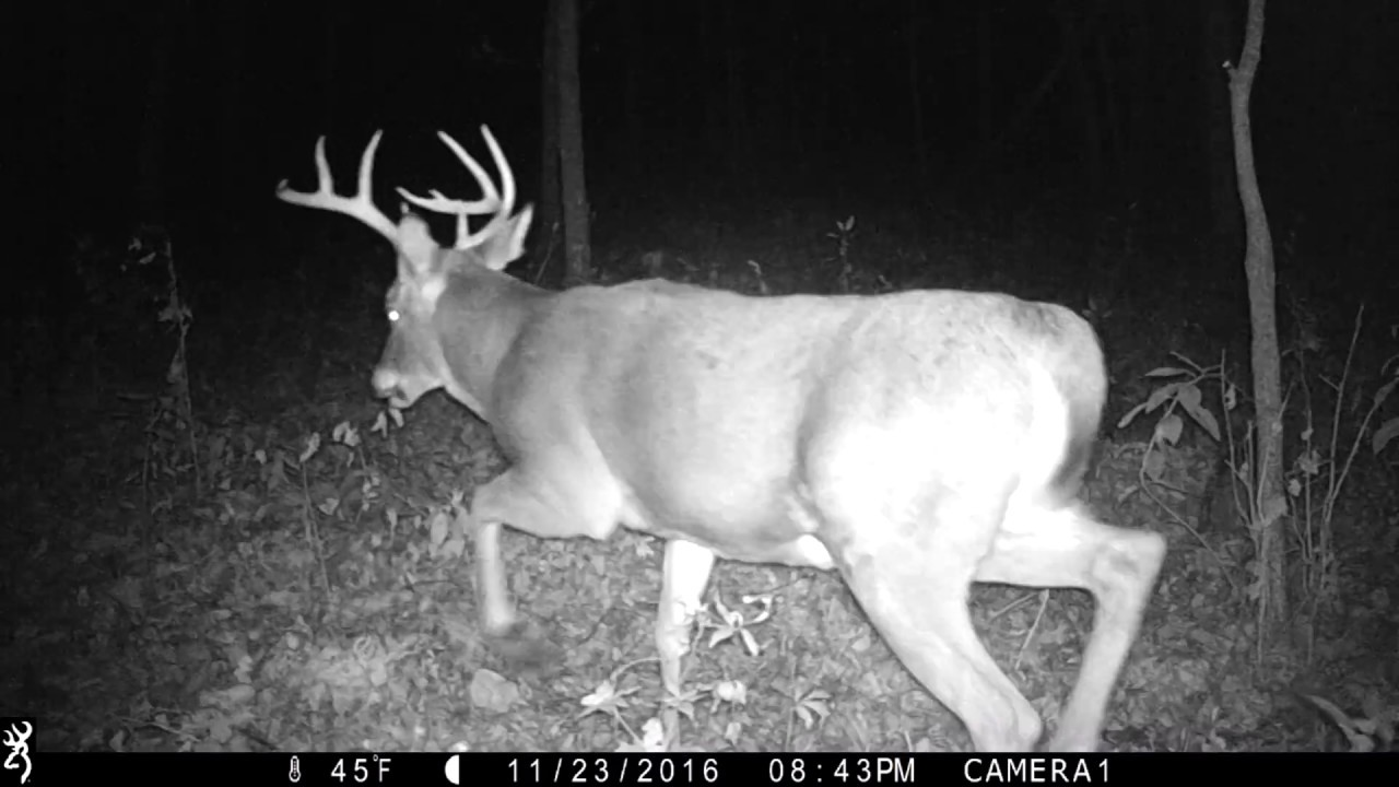 browning strike force elite btc5hde trail cam night video of 10