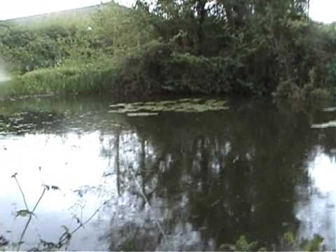 Fishing for carp and rudd at my local pond video 3 youtube for Local fishing ponds