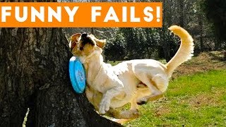 TRY NOT TO LAUGH at FUNNY PET FAILS 2017 | Funny Pet Videos