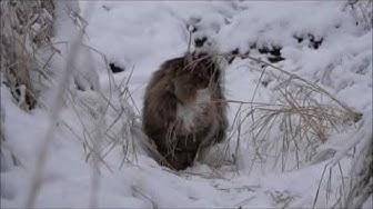 Sämpy ja Elmeri - Marraskuista lumipöllöilyä