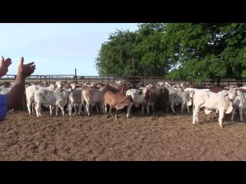 Weaner Education - A Training video for your staff  - Part 3 - Weaner Education