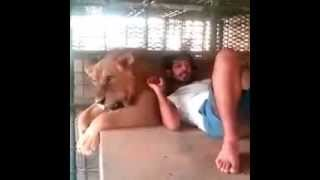 Sheikh Hamdan prince of Dubai with lion