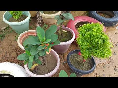 BOTANICAL AND GARDENING SESSION| OUTDOOR SESSION WITH CLASS-IX STUDENTS