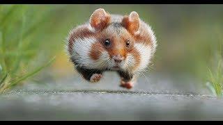 Лучшие Приколы про животных | Подборка самых смешных видео про животных
