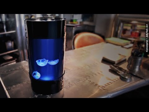Vanilla Ice Is Backing A Brand New Invention: A Jellyfish Tank - Newsy