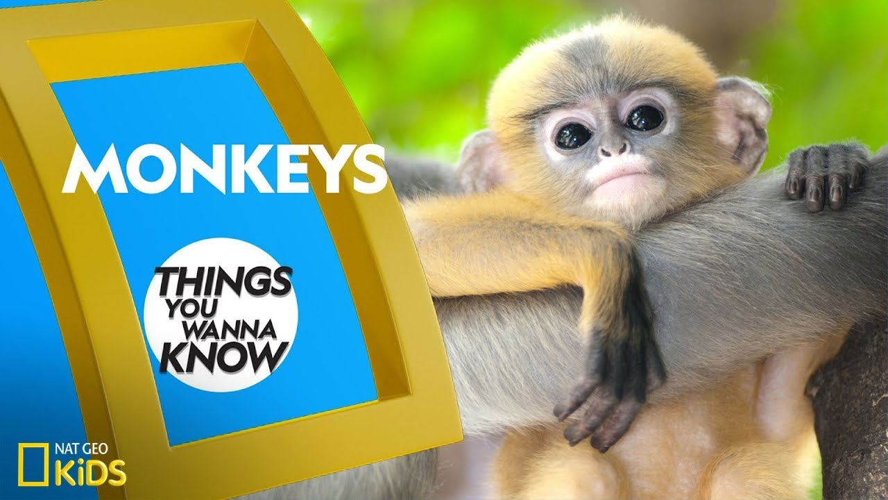Cool Facts About Monkeys | THINGS YOU WANNA KNOW