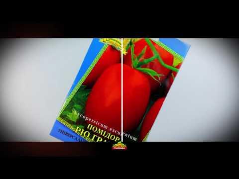 Купить семена Луковичные цветы Семена почтой и курьером