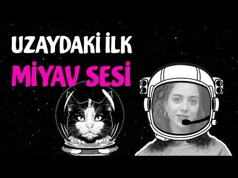 Uzaya Giden İlk Kedi (Felicette)