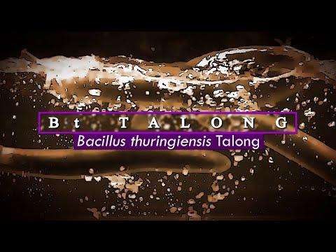 Bt Eggplant Story (English Subtitles)