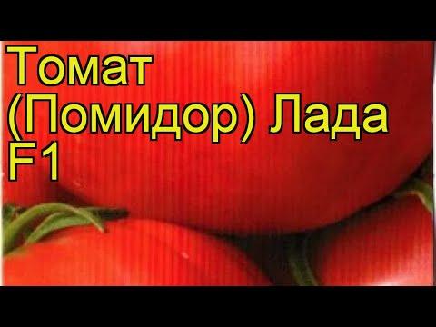 Томат обыкновенный Лада F1. Краткий обзор, описание характеристик, где купить семена