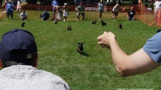 Wiener Dog Race Ottawa | Wiener-paw-looza - Crusoe The Celebrity Dachshund