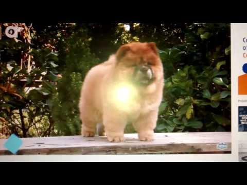 as-13-raças-de-cão-mais-perigosas-do-mundo-tem-o-pitbull-também