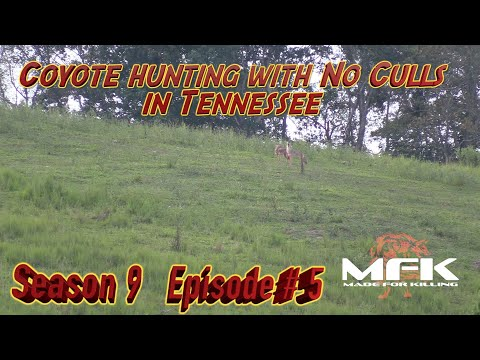 """Coyote Hunting with """"No Culls"""" in Tennessee S9:E5"""