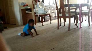 18month old baby does football drill