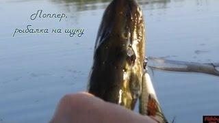 Ловля щуки летом на поппер***/fishing for pike/Мой видео-отчет.