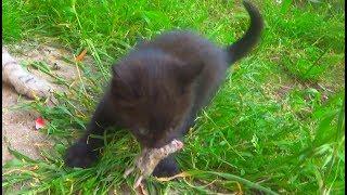 Кошка словила мышку для своего котенка. Натуральное питание. IRL