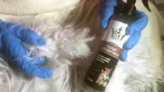 Что делать, если ваша собака превратилась в свалявшийся комок?(, 2016-12-12T07:38:01.000Z)