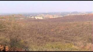 A panoramic view of farms - Gwalior