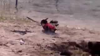 penguin suicide bomber 2