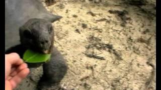 СЕЙШЕЛЫ (Маэ,Праслин,Ла Диг)-клип.avi
