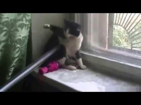 Кошки и пылесос приколы