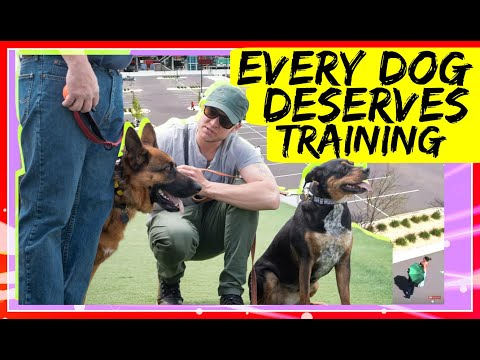 Do I need a Dog Trainer? Dog Training is good for every dog!