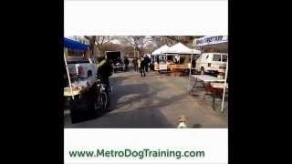 Metro Dog Training recall in a crowded area.