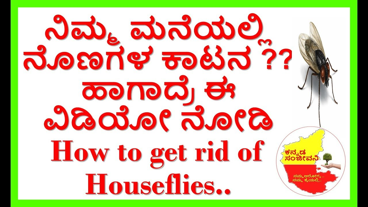 how to get rid of flies in the house naturally kannada sanjeevani youtube. Black Bedroom Furniture Sets. Home Design Ideas