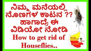 How to Get Rid of Flies in the House Naturally..Kannada Sanjeevani..