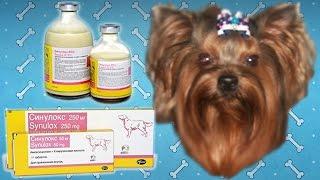 Синулокс для собак | Инструкция по применению.