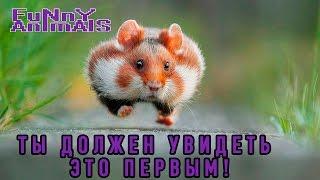 Смешные животные 2016 | ПОДБОРКА | СМЕШНО ДО СЛЁЗ 2016!!! | Funny Animals compilation