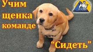 Урок №2. Как научить собаку команде сидеть / Выдержка по команде