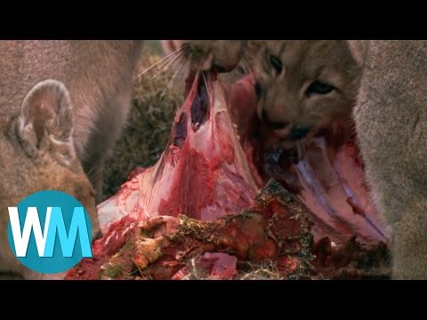 Top 10 Bloodiest Moments From Planet Earth
