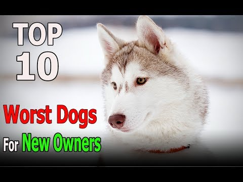 Top 10 Worst dog Breeds for New Owners | Top 10 animals