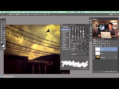 How To Create A Bird Brush In Photoshop