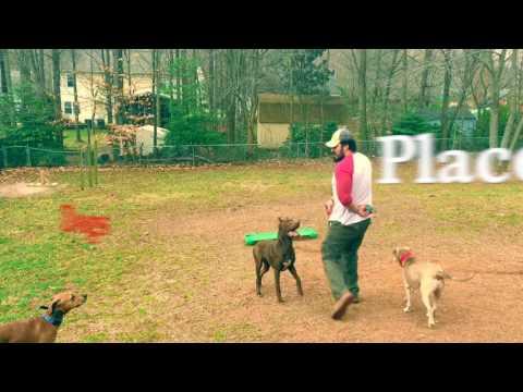 Plott Hound, Alex! Plott Hound Off Leash Dog Training | Hounds Can Be Off Leash | Off Leash K9