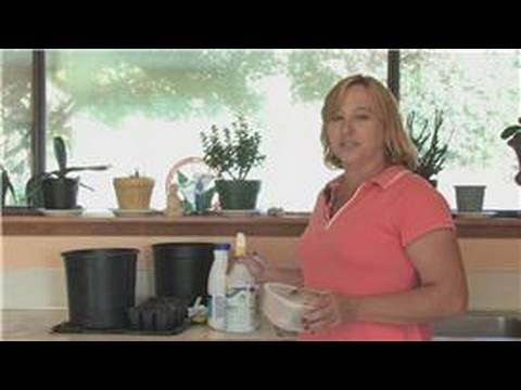 how to clean plant pots