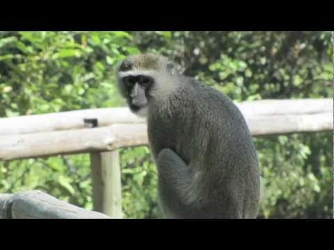 Beautiful Land - Botswana Safari