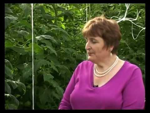 Сад и огород. Помидоры, томаты (1)