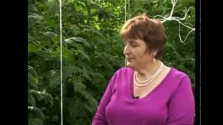 Сад и огород. Помидоры, томаты (1)(Сад и Огород для Загородной Жизни -- это явление неизбежное! Но теперь Вы можете наслаждаться не только плод..., 2012-02-23T14:45:15.000Z)