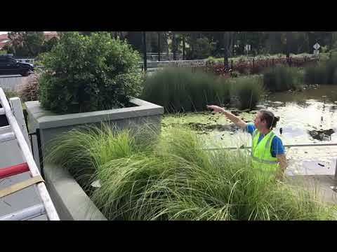 Example of Filterra Bioretention System treating lake water.