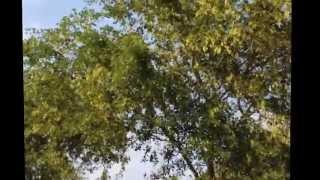 Prefect Wedding Song in Telugu