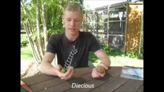 Kiwiberries & Kiwifruit - Tasting & Growing