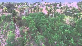 LLAMAS RUBBER Plantation Drone Footage - HD Aerial View