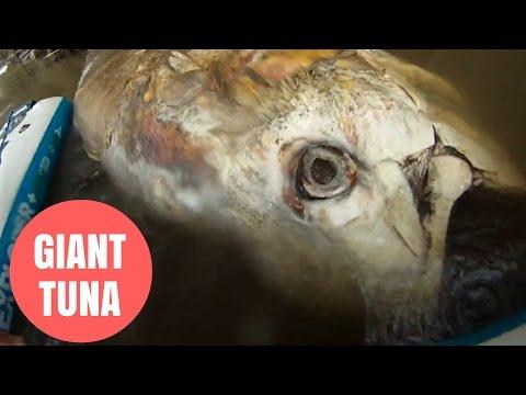 Un monstruo marino de dos metros apareció en un río en el centro de Inglaterra