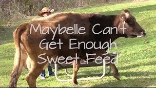 Maybelle Can