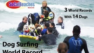 3 Dog Surfing World Records 14 Dogs on a Surfboard